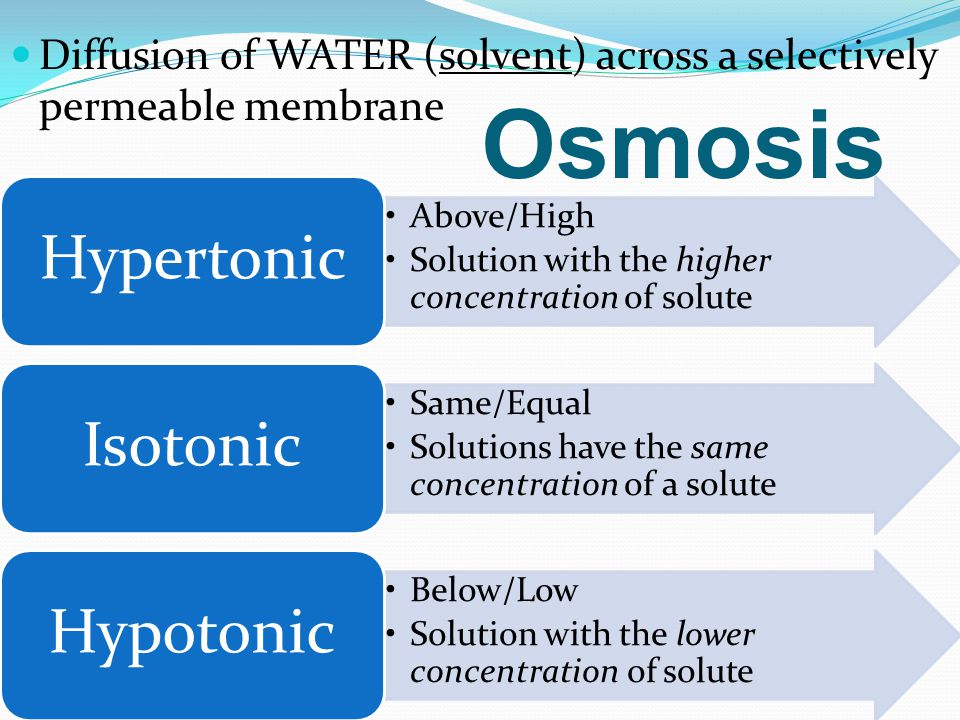 isotonic hypotonic and hypertonic Tonicity is a measure of the in plant cells the terms isotonic, hypotonic and hypertonic cannot strictly be used accurately because the pressure exerted.