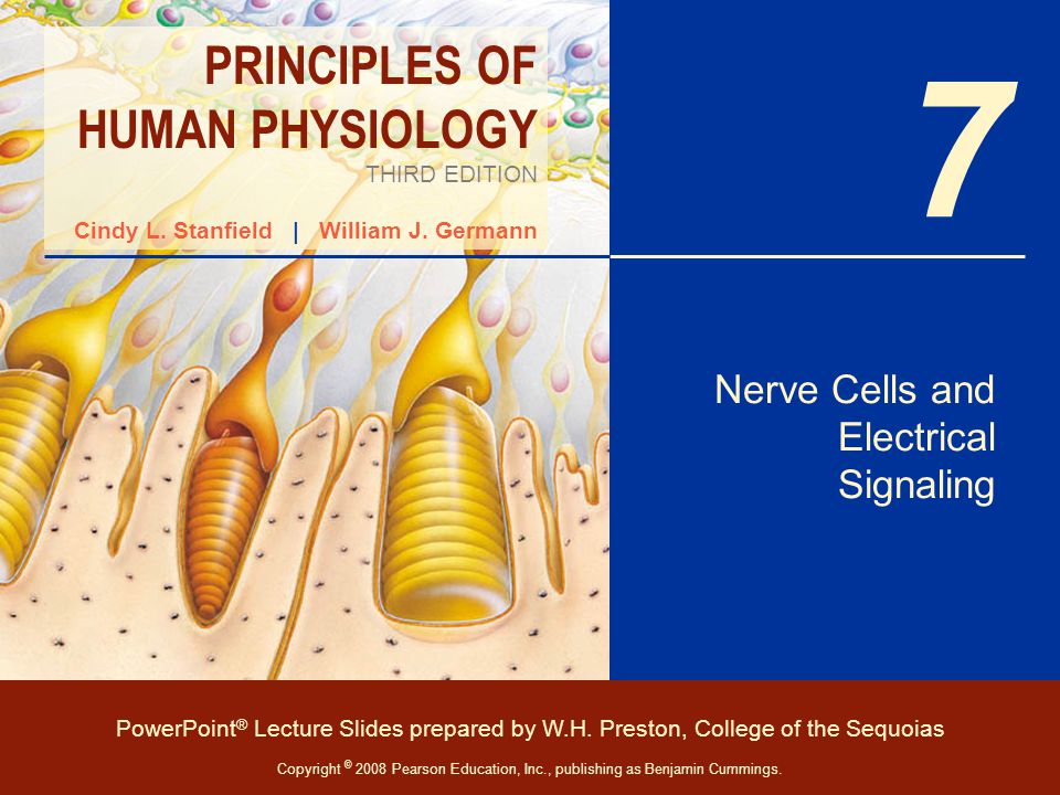 Nerve Cells and Electrical Signaling