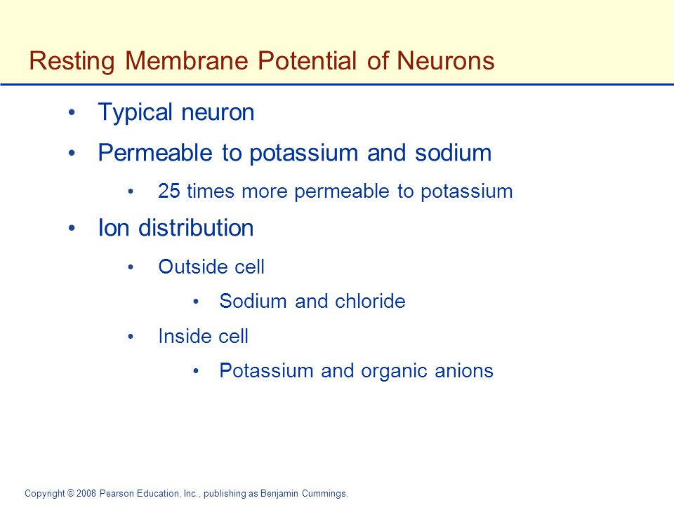 Resting Membrane Potential of Neurons
