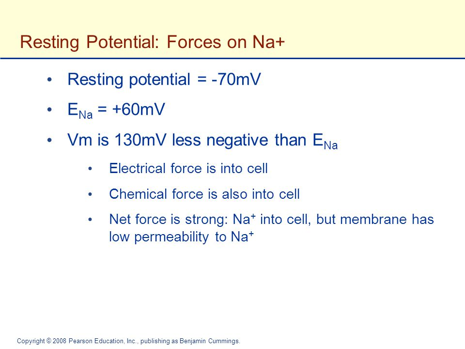 Resting Potential: Forces on Na+