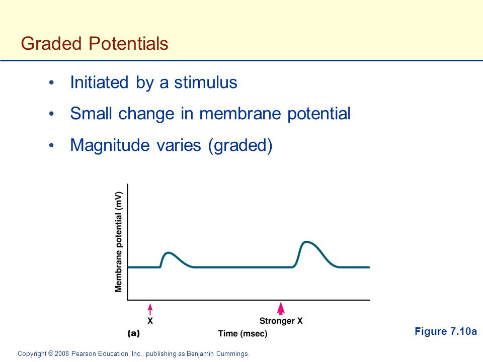 Graded Potentials Initiated by a stimulus