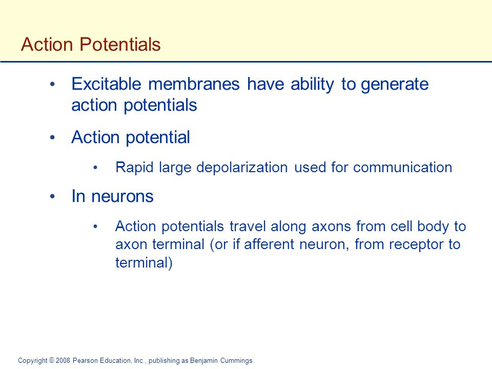 Action Potentials Excitable membranes have ability to generate action potentials. Action potential.