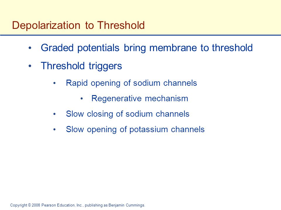 Depolarization to Threshold