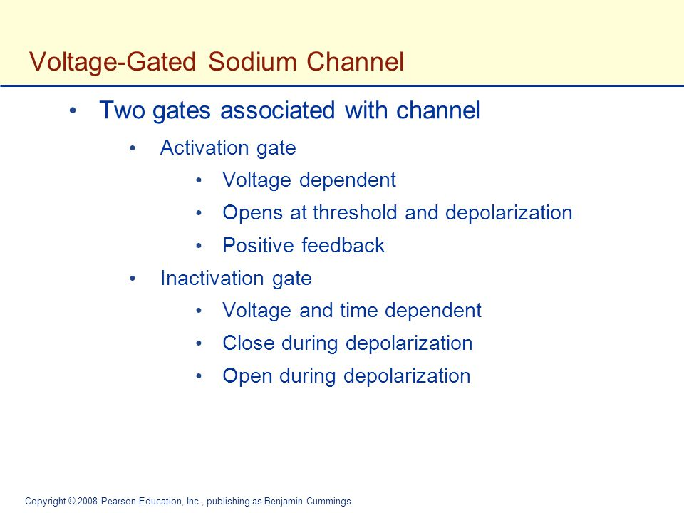 Voltage-Gated Sodium Channel