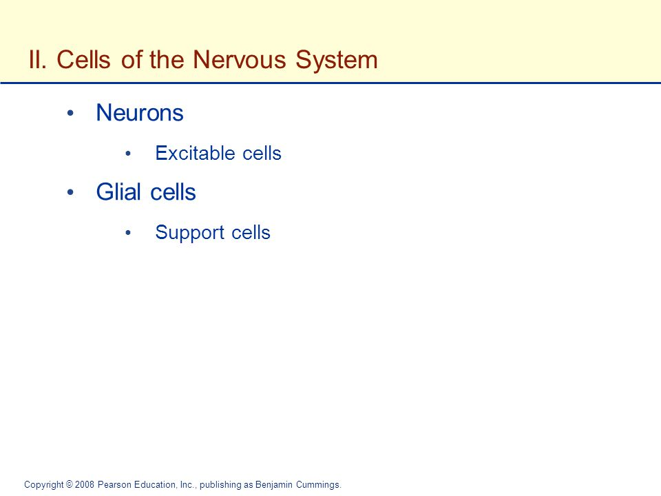 II. Cells of the Nervous System