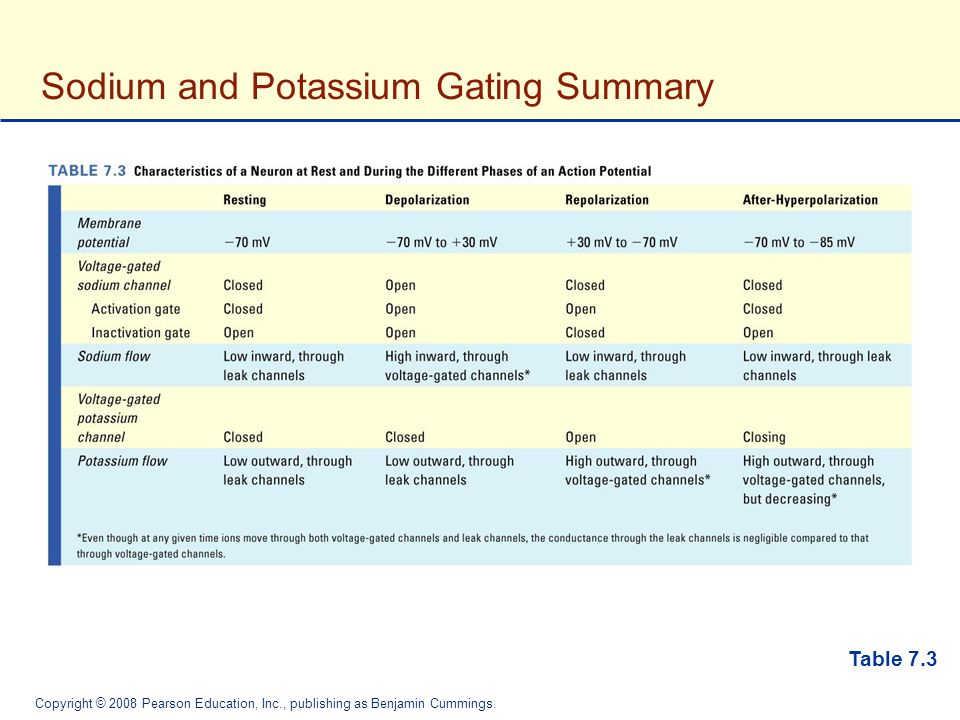 Sodium and Potassium Gating Summary
