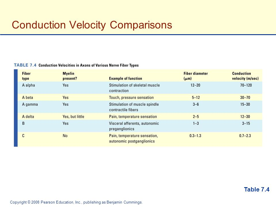 Conduction Velocity Comparisons