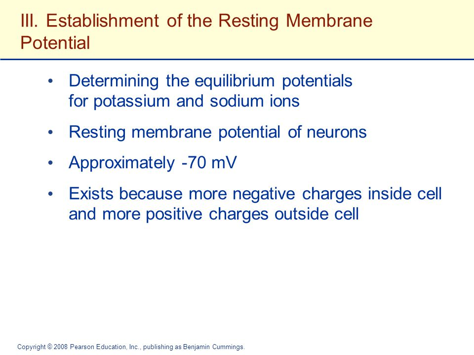 III. Establishment of the Resting Membrane Potential