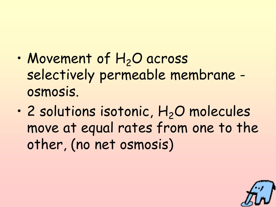 Movement of H2O across selectively permeable membrane - osmosis.