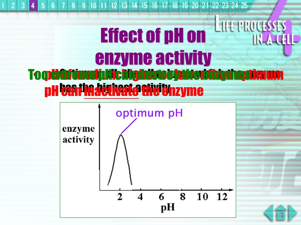effect of ph on enzyme activity pdf