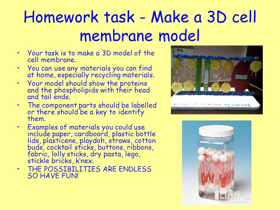 Cell membrane homework