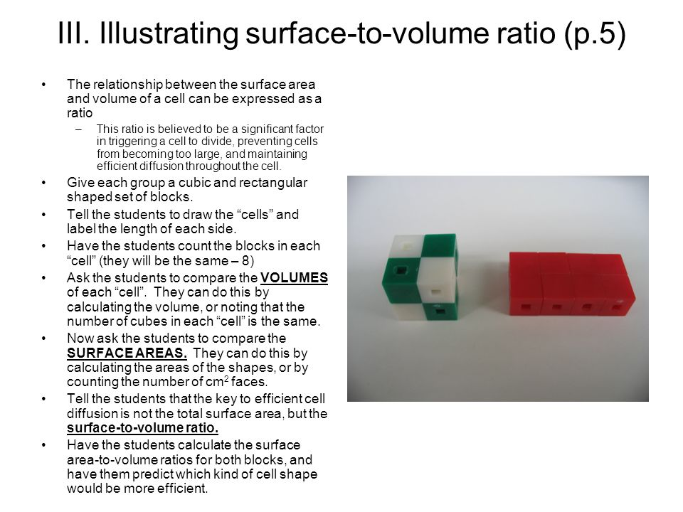 relationship between cell size and surface area to volume ratio