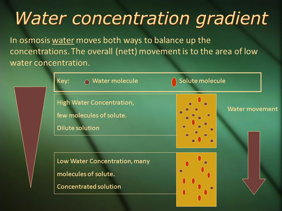 osmosis concentration gradient In the first part of this video we looked at diffusion to move gases and osmosis for the movement of water, from high concentration to low concentration.