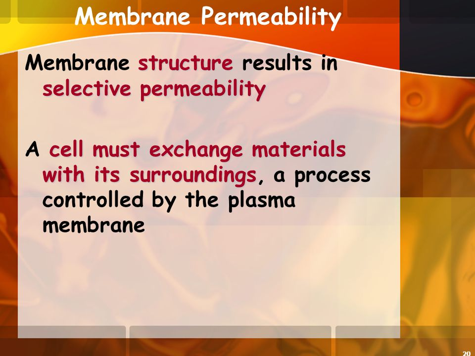 permeability of the plasma membrane materials Permeability of plant cells to different substances when, for instance  rôle in  the formation of the plasma-membranes, but he does not think that they are the.