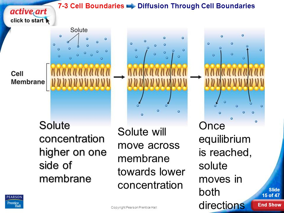 when a solute is able to diffuse through a membrane For cells 10-18, the particle size of the solute is not able to diffuse through the semi-permeable membrane 1 c sam llx{peß- 10 13 16 %h20.