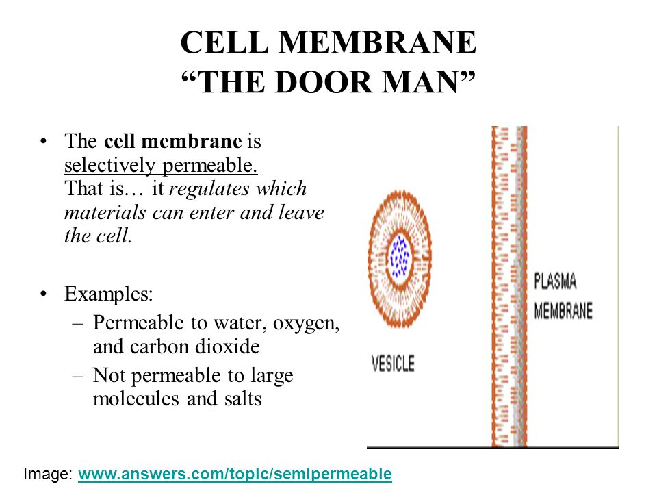 The Cell in its Environment - ppt download