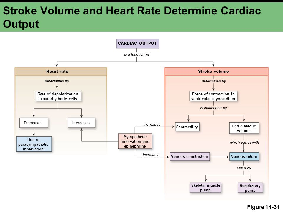 stroke volume diagram heart of the cardiac output pictures to pin on pinterest ktm 2 stroke wiring diagram #8