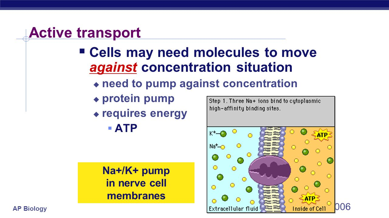 the cell membrane - essays Free essay: lab #1: cell membrane prepared for gary v lawrence biology 0983 by zane jeffels partners: lily juno, huynh, and lin yan sun preformed: october.