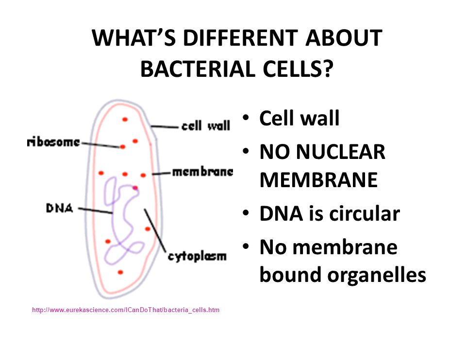 cells  u0026 cell organelles