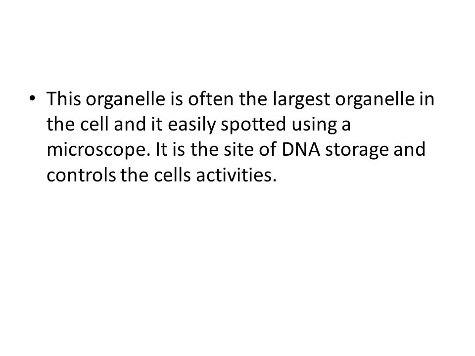 This organelle is often the largest organelle in the cell and it easily spotted using a microscope.
