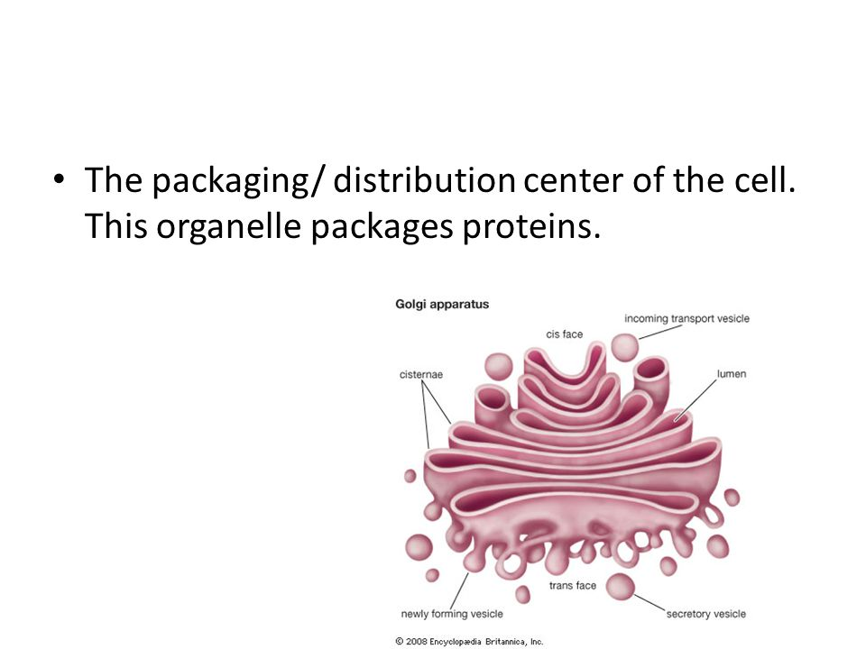 The packaging/ distribution center of the cell