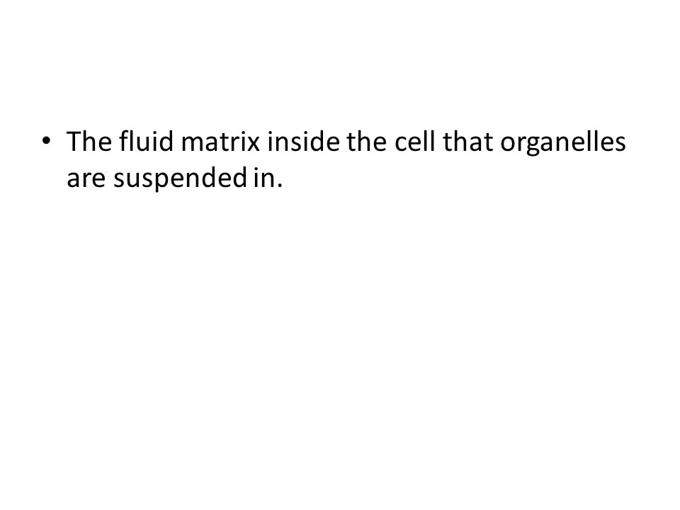 The fluid matrix inside the cell that organelles are suspended in.