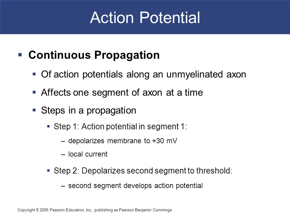 Action Potential Continuous Propagation
