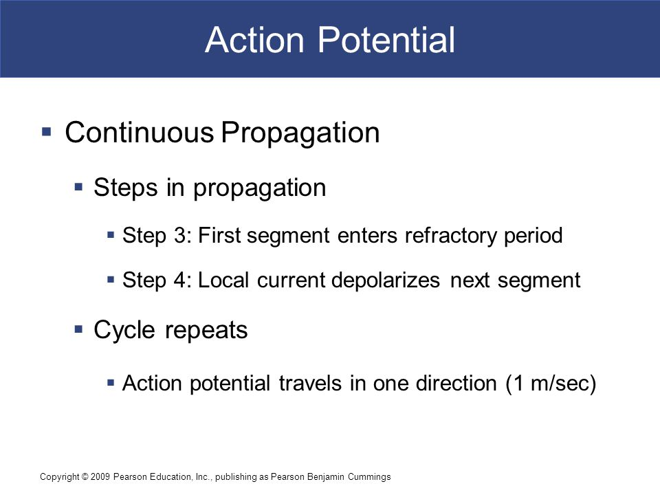 Action Potential Continuous Propagation Steps in propagation