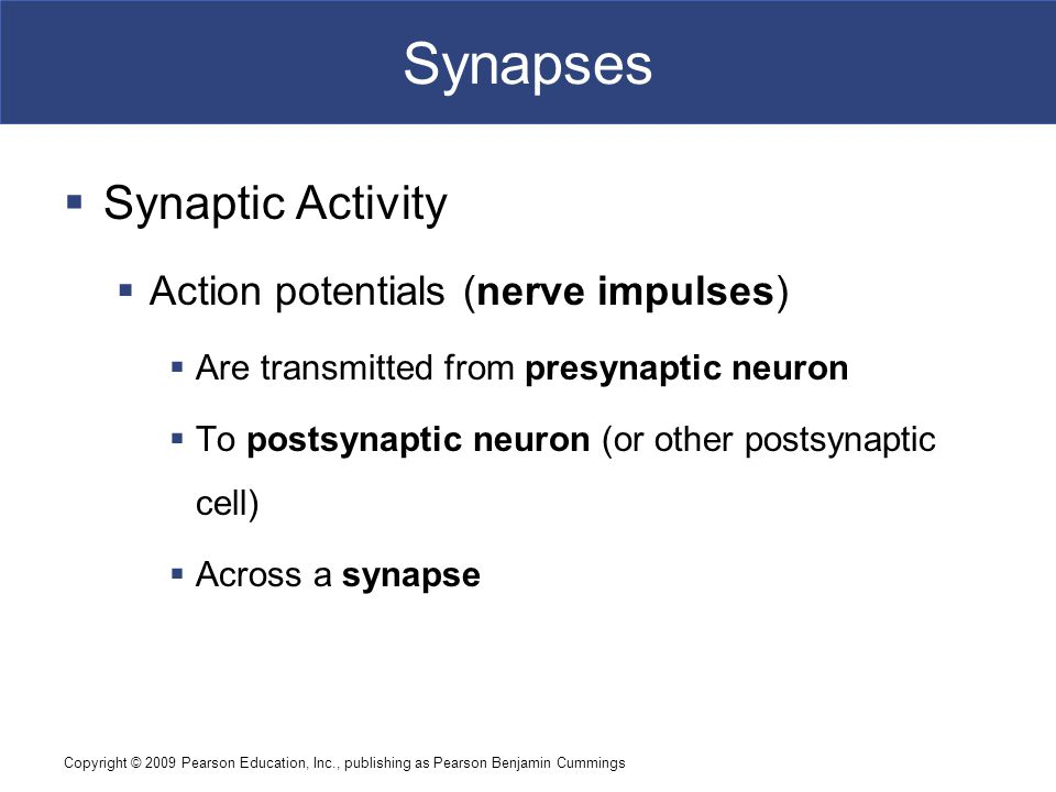 Synapses Synaptic Activity Action potentials (nerve impulses)