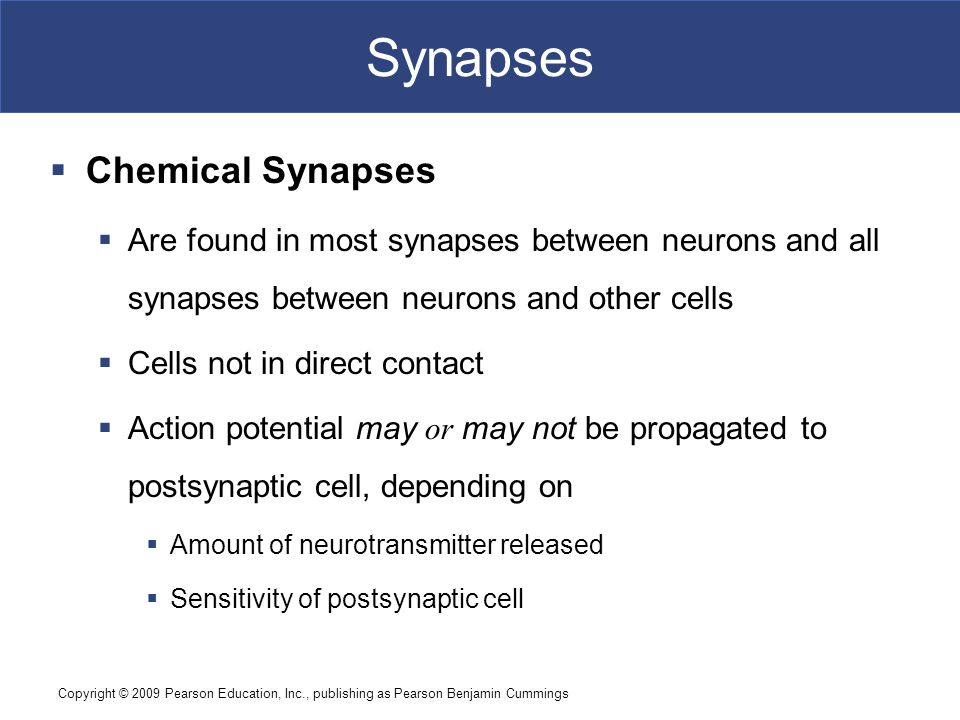 Synapses Chemical Synapses