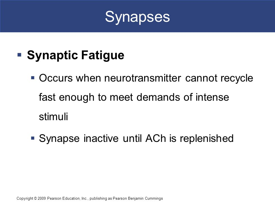 Synapses Synaptic Fatigue