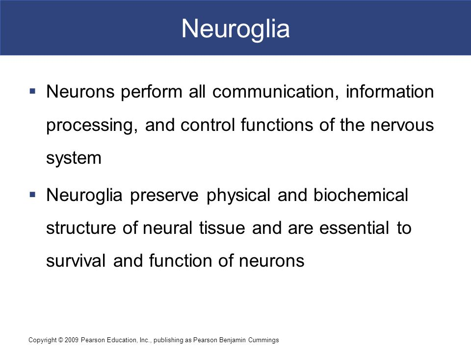 Neuroglia Neurons perform all communication, information processing, and control functions of the nervous system.