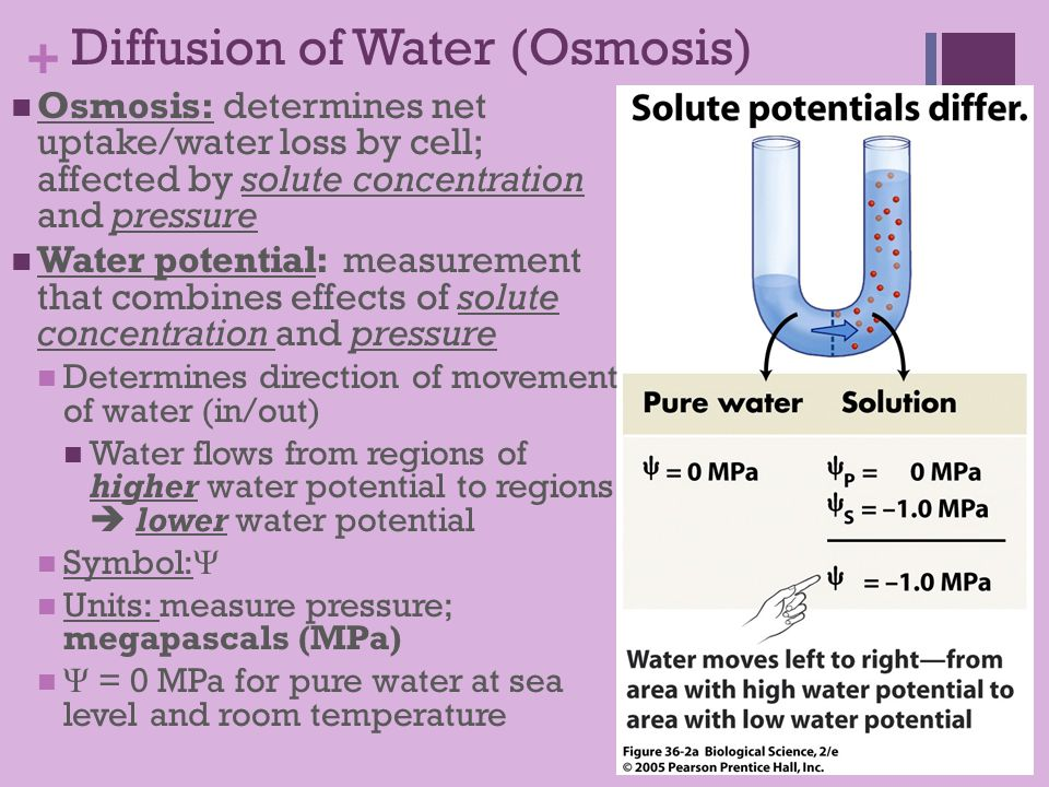 effects of osmosis and diffusion on The effects of varying the concentration of liquid surrounding plant cells  these examples should remind us that osmosis is only a type of diffusion,.