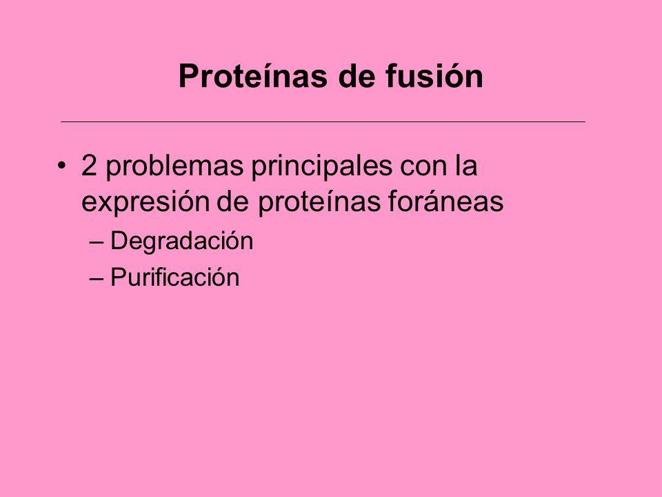 Proteínas de fusión 2 problemas principales con la expresión de proteínas foráneas.