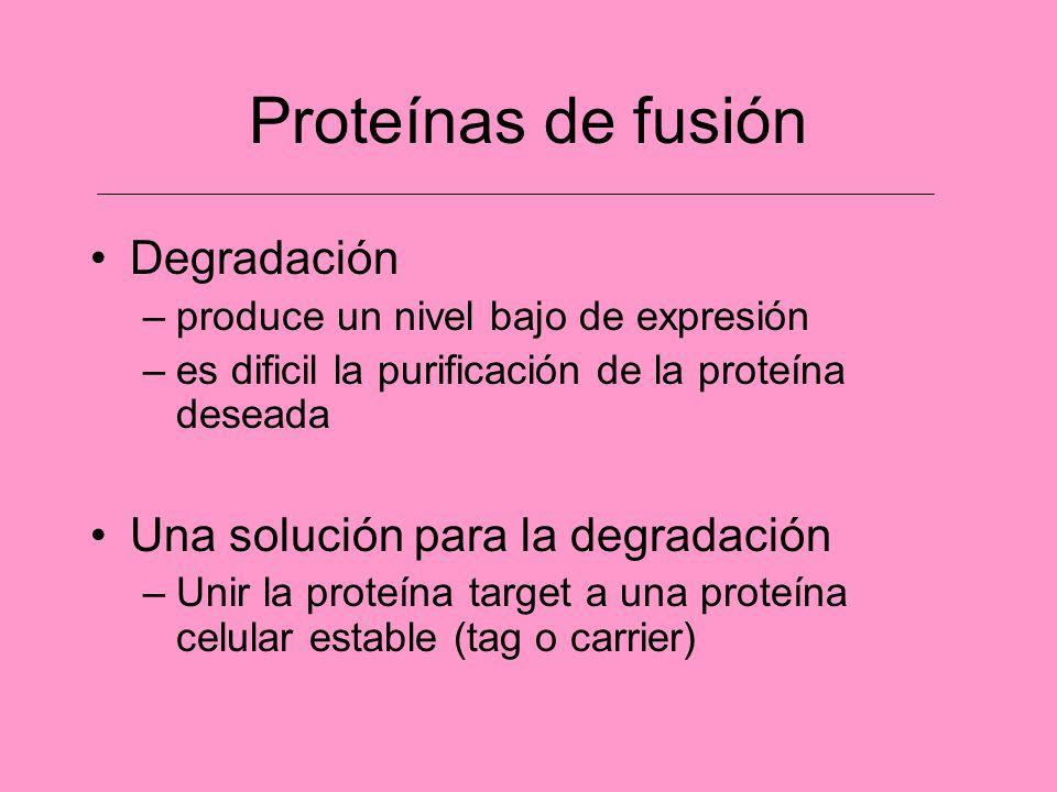 Proteínas de fusión Degradación Una solución para la degradación