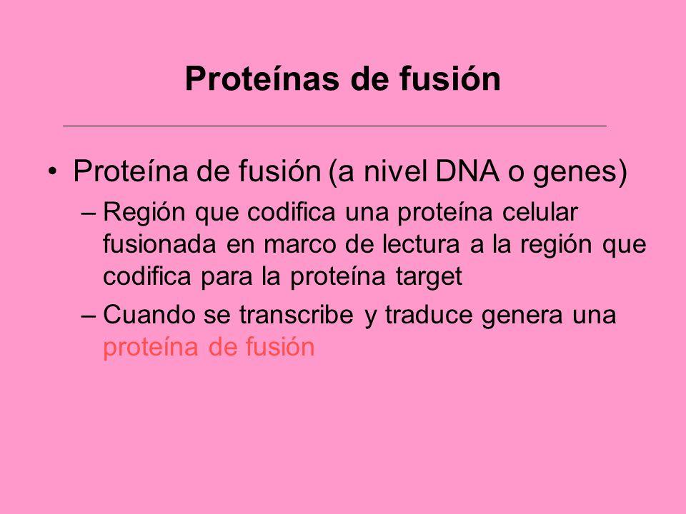 Proteínas de fusión Proteína de fusión (a nivel DNA o genes)