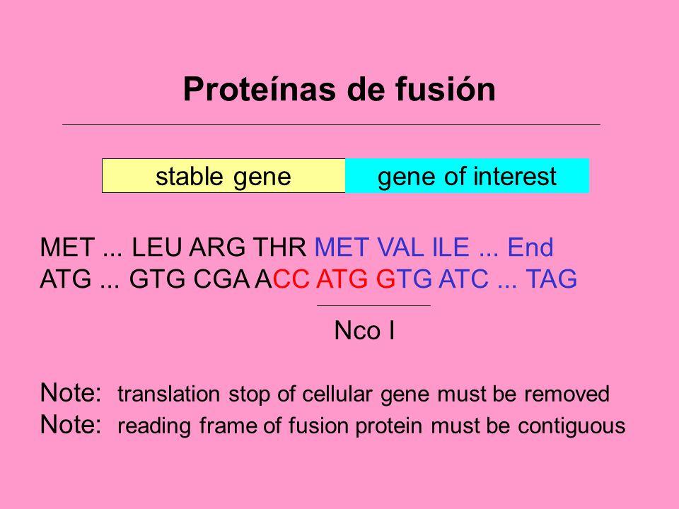 Proteínas de fusión stable gene gene of interest
