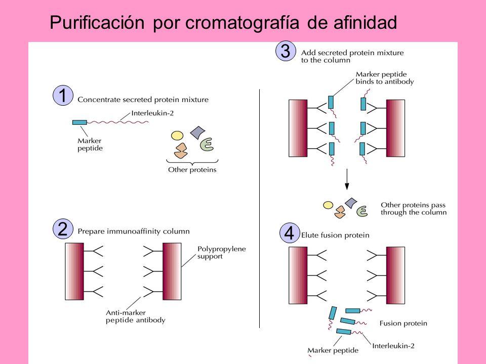 Purificación por cromatografía de afinidad
