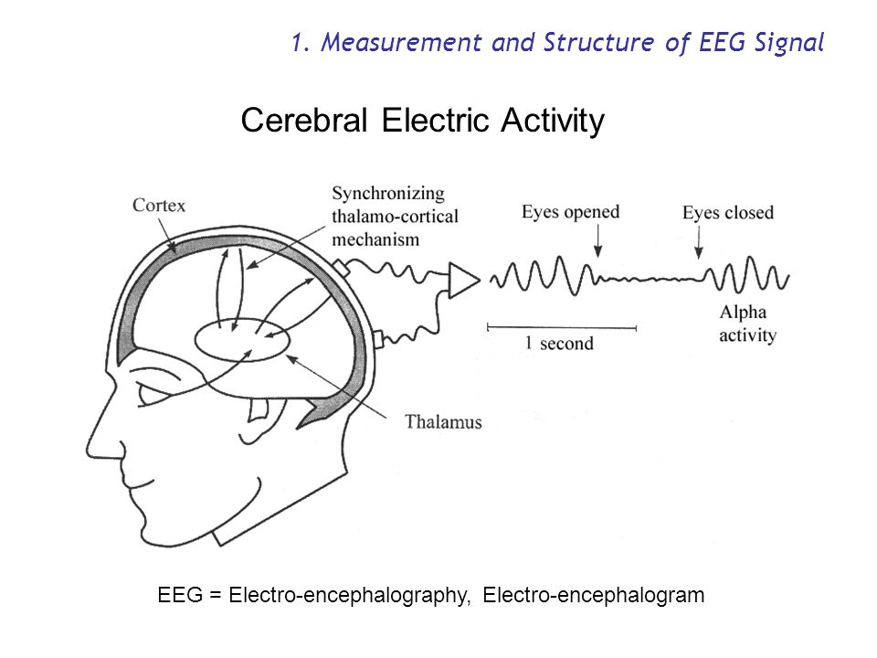 1. Measurement and Structure of EEG Signal