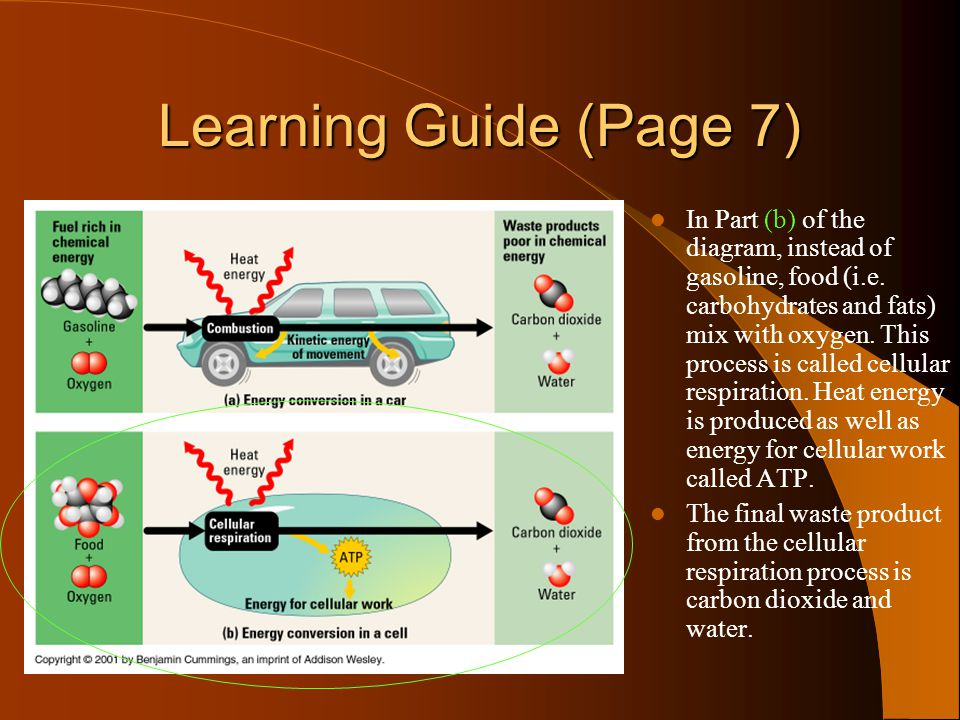 Powerpoint learning quest ppt video online download learning guide page 7 ccuart Choice Image