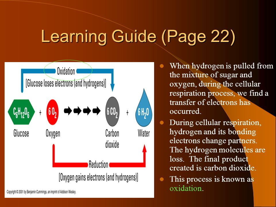 Powerpoint learning quest ppt video online download learning guide page 22 ccuart Choice Image
