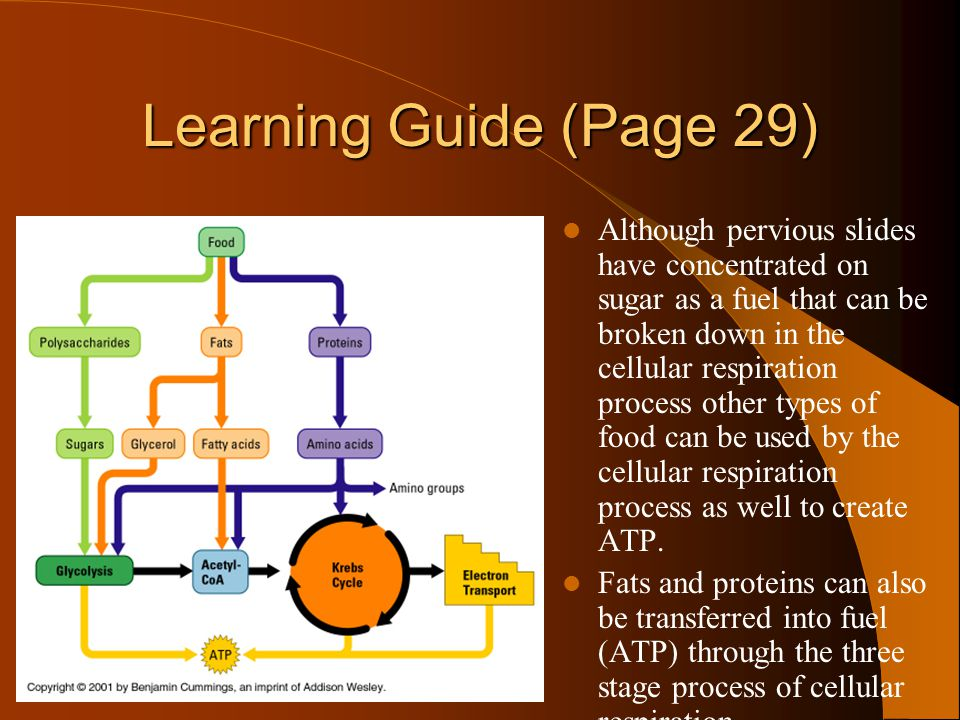 Powerpoint learning quest ppt video online download learning guide page 29 ccuart Choice Image