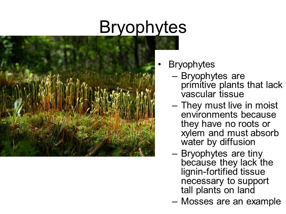 The World of Plants in 41 Minutes - ppt video online download