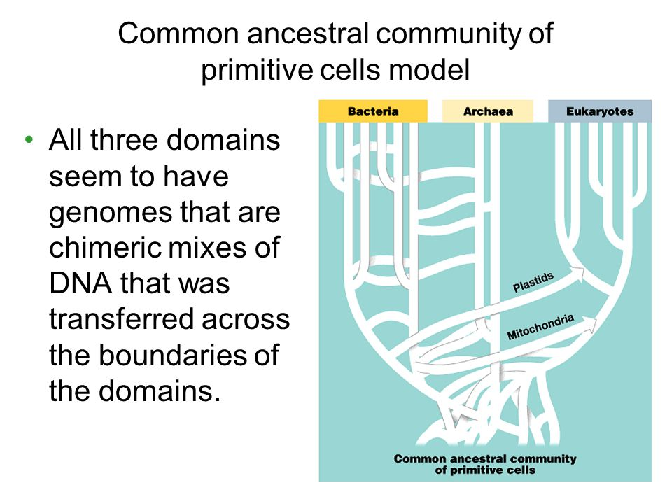 Common ancestral community of primitive cells model