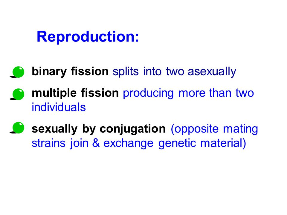 Reproduction: binary fission splits into two asexually