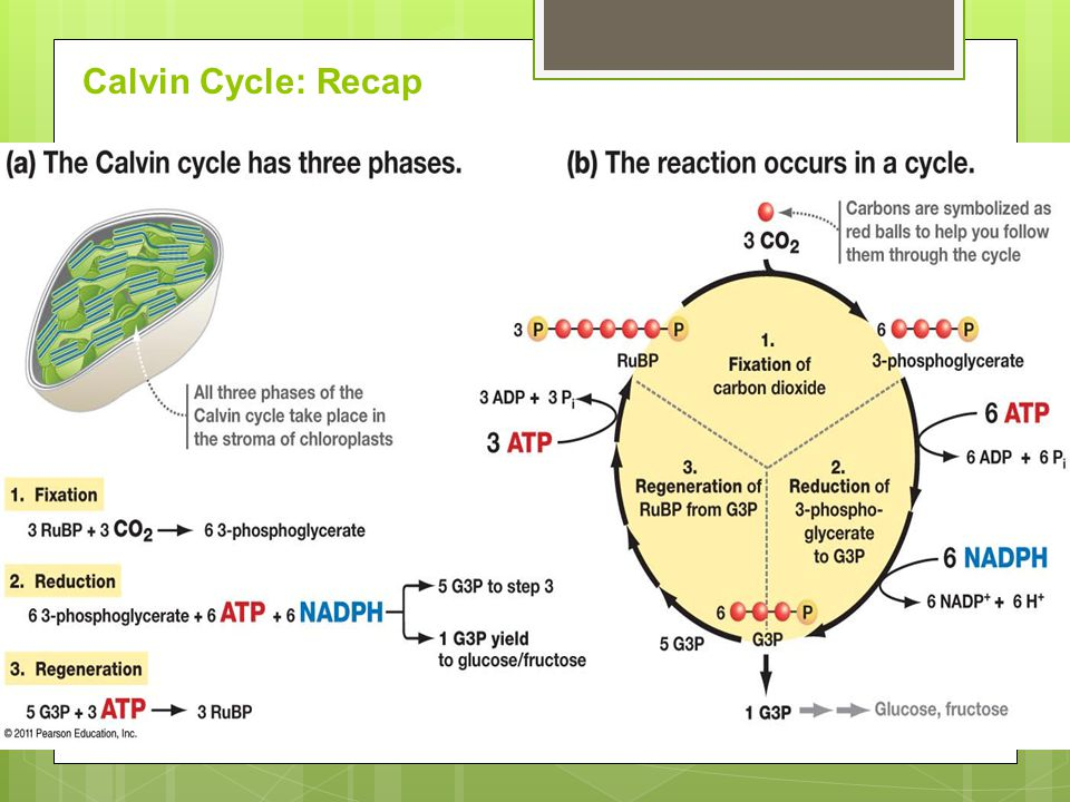 an overview of the importance of the process of nitrigen cycle and fixation Free nitrogen available in the air is converted to compounds of this element by certain bacteria which can be used by other living organisms through a process called nitrogen cycle nitrogen fixation is a bacterial activity that takes place in soil and water.
