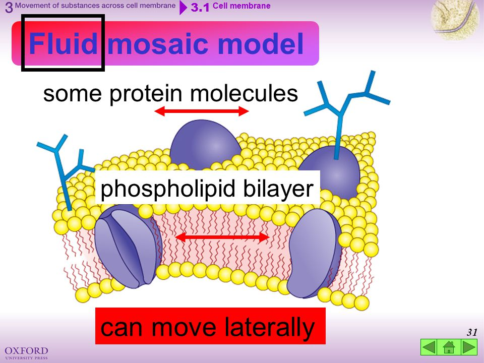 Think about… 3.1 Cell membrane 3.2 Movement of substances across ...