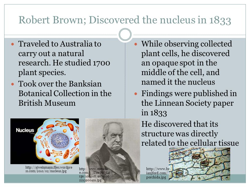 the discovery and news about the cell nucleus Inside life science  that's the length in inches across a cell's nucleus,  watson and crick received a nobel prize in 1962 for their discovery.