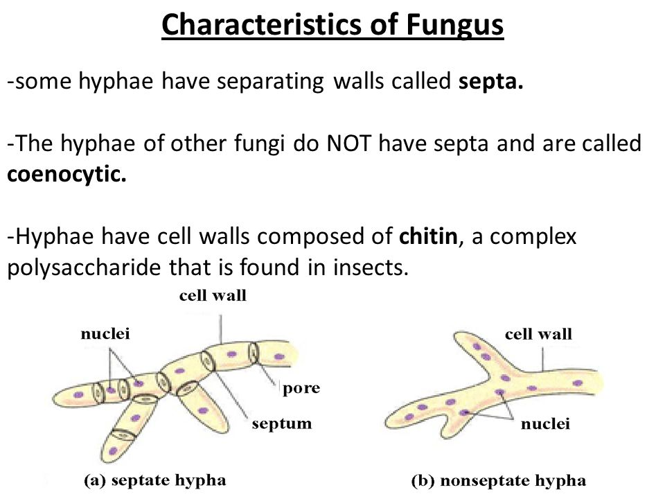 fungi study guide essay Fungi study guide b organisms that are not animals, plants, or fungi using the six kingdom model of classification classification test study guide, classification.