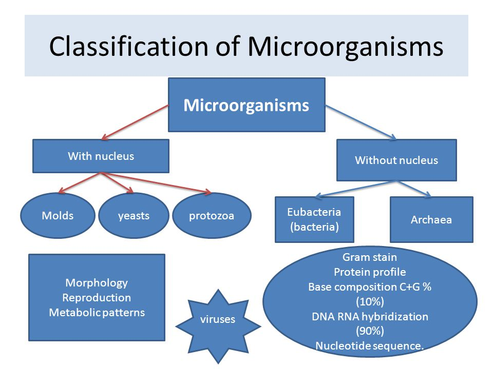 Ewrazphoto Unicellular Organisms Ppt on Worksheets Online Chapter 1